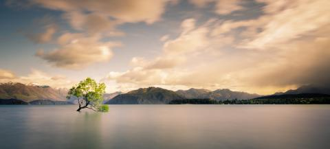 Lonely tree of Wanaka